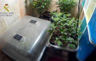 La Guardia Civil localiza una vivienda en San Martín de la Virgen del Moncayo utilizada para el cultivo indoor de marihuana