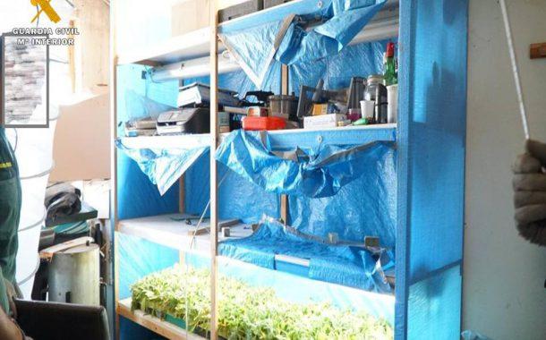 La Guardia Civil interviene en una finca de Caspe casi 2500 plantas de marihuana