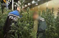 La Guardia Civil interviene más de 7.500 plantas de marihuana en dos operaciones desarrolladas en Zaragoza y Toledo