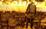 La Guardia Civil interviene más de 2600 plantas de marihuana en tres naves industriales próximas a Zaragoza